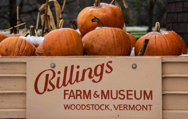 Thanksgiving Weekend at Billings Farm